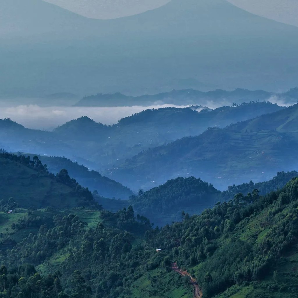The Great Views of Bwindi Impenetrable Forest