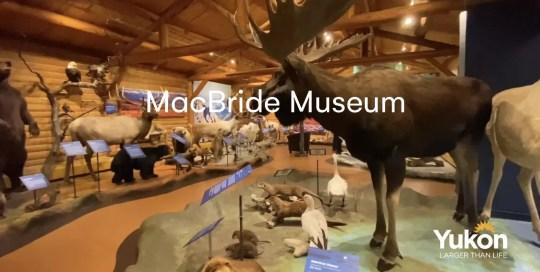 Whitehorse – MacBride Museum