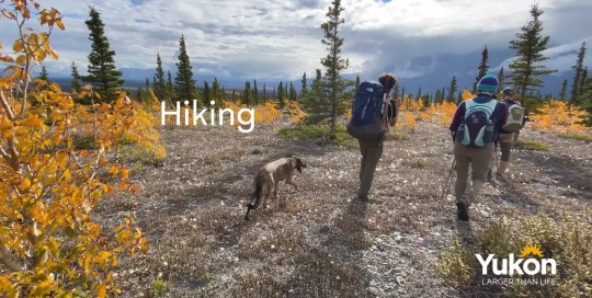 Haines Junction – Hiking