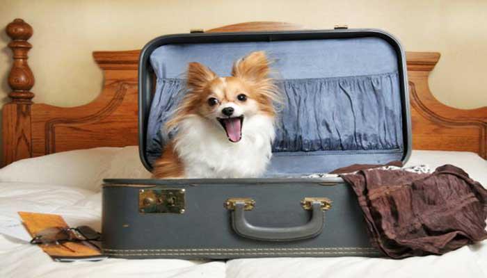4 Dicas Rápidas Para Viajar com Animais de Estimação