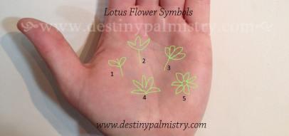 lotus flower symbol, lotus sign, palmistry lotus sign, palm symbol lotus flower, lotus flower sign, palm signs,