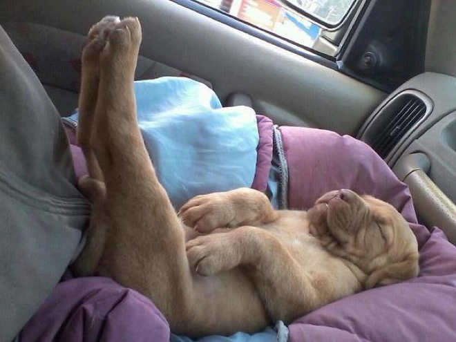 puppies-sleeping-7
