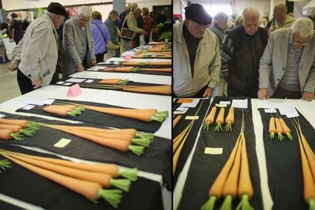 giant-vegetables-106