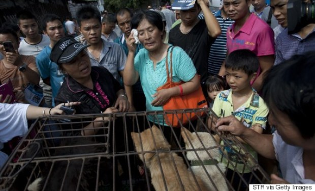 This picture taken on June 20, 2015 shows animal-loving Yang Xiaoyun (C) going around buying some 100 dogs at a market in Yulin, in southern China's Guangxi province. Yang has paid more than 1,000 USD to prevent around 100 canines from being eaten ahead of a dog meat festival which has provoked outrage worldwide. CHINA OUT AFP PHOTO (Photo credit should read STR/AFP/Getty Images)