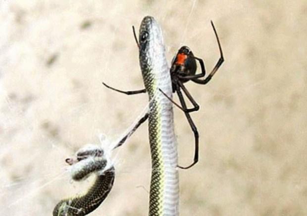 spidersnake4