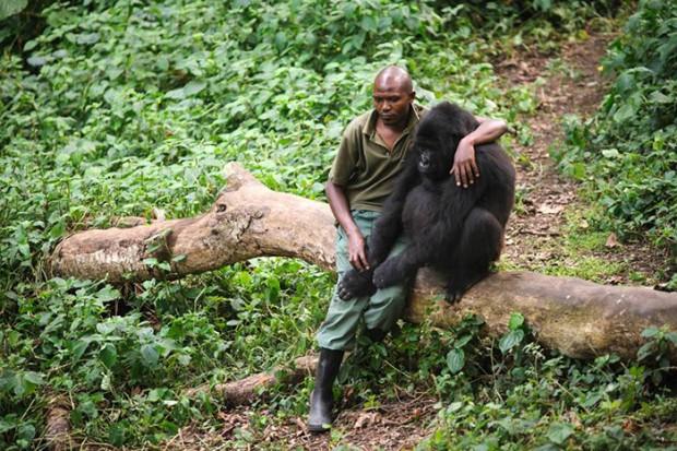 caretaker-comforting-gorilla-lost-mother
