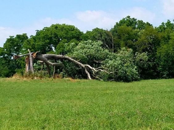 shawshank-redemption-tree