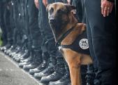 Diesel, chien d'assaut du RAID