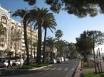 Cannes palmiers