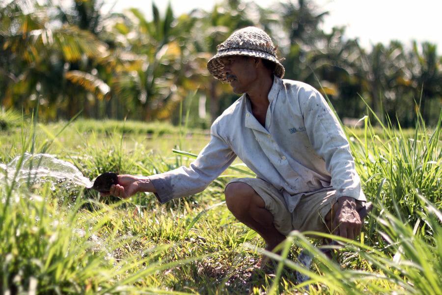 Quoi faire pendant 15 jours à Bali en Indonésie ?