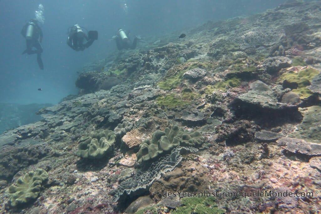 Apprendre la plongée à Bali