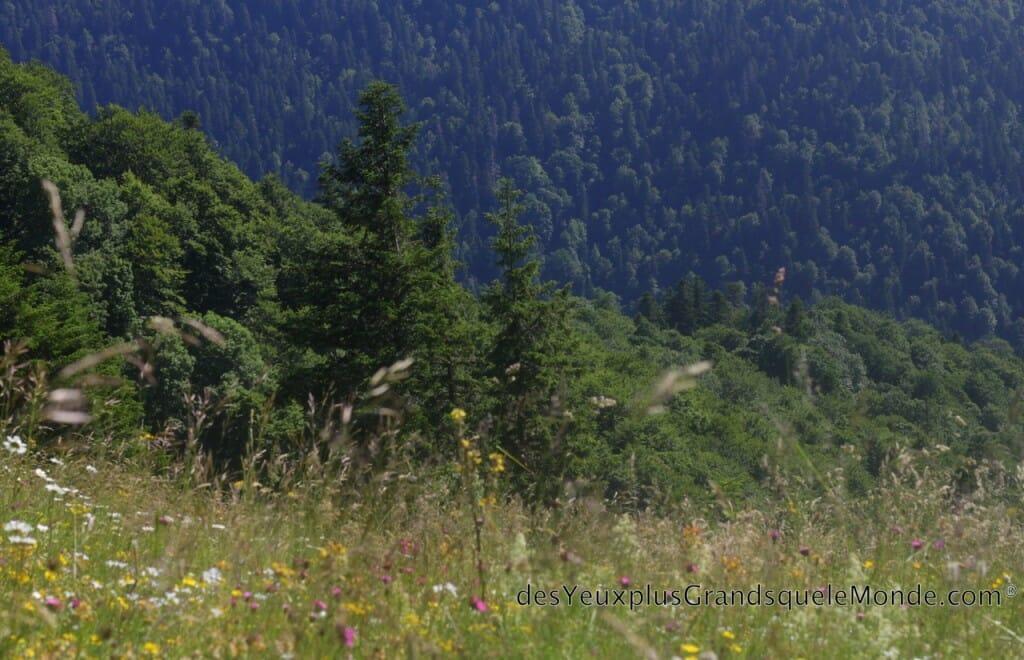 Randonner dans le Parc Biogradska Gora au Monténégro - Vallée de Dolovi