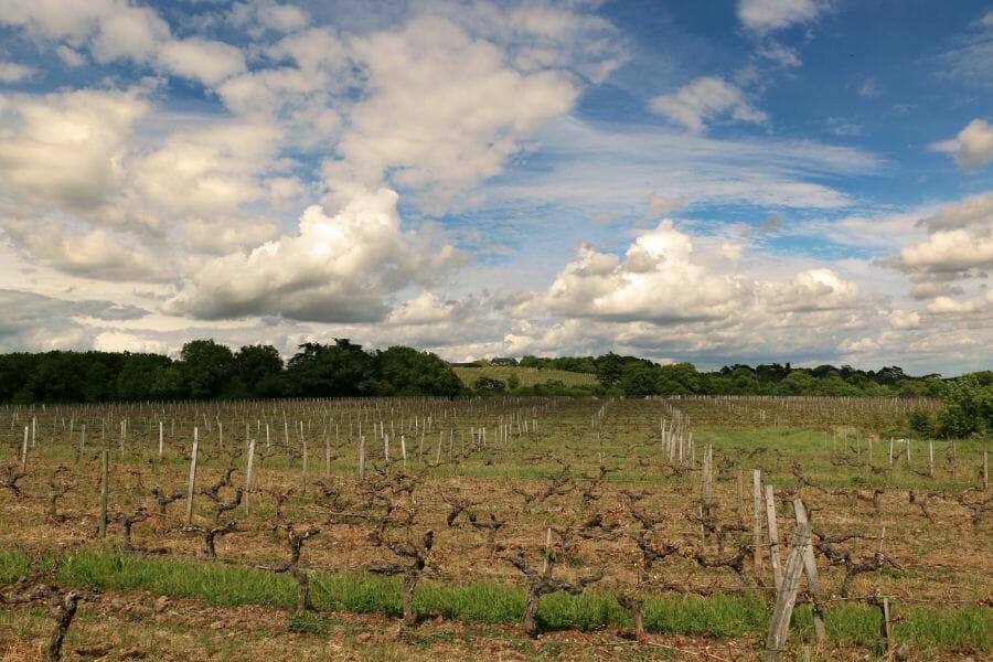 Un week-end en Anjou - Domaine Closel