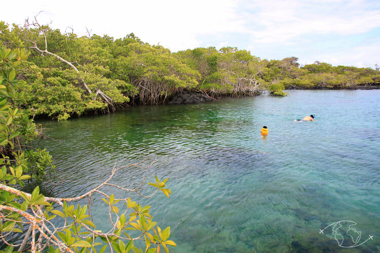 Visiter les Galapagos - Concha Perla - île Isabela