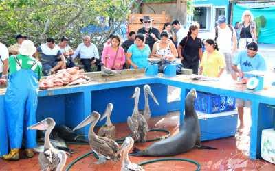 Visiter les Iles Galapagos – A la découverte de l'île Santa Cruz