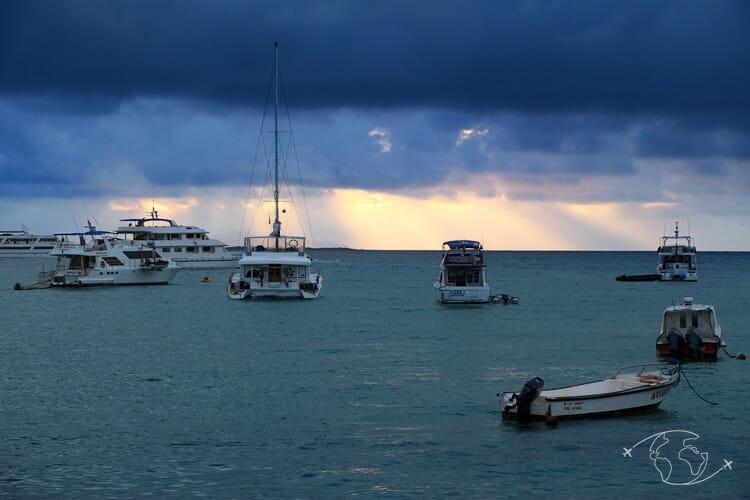 Iles Galapagos - Puerto Ayora - Ile Santa Cruz