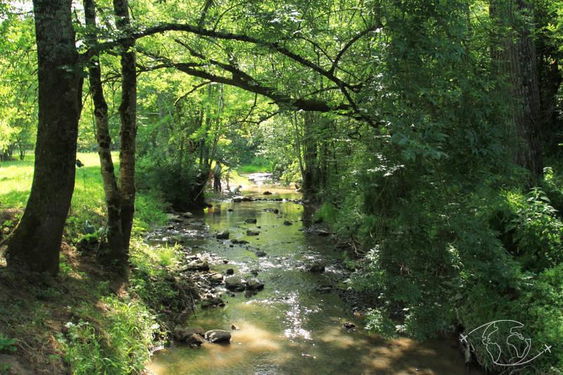 Randonner en Deux-Sèvres - Dans les sous bois