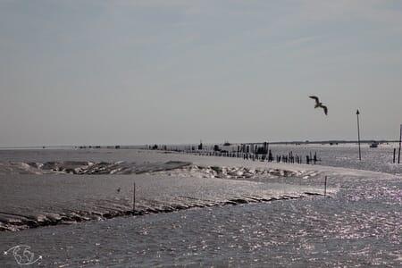 Baie de l'Aiguillon sur Mer - Charente Maritime - Marais Poitevin