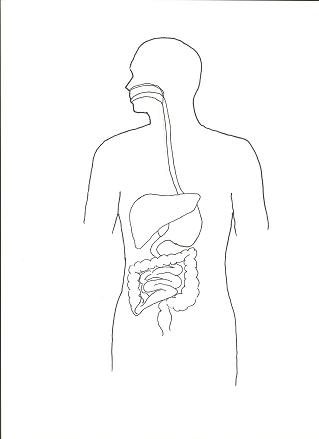 lesson plans for digestive system
