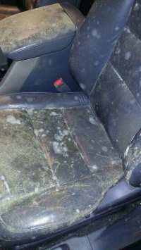 Honda Interior Mold - Detail Daddy