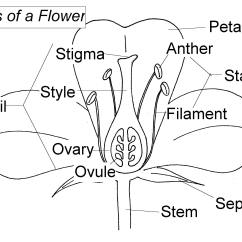 Cross Pollination Diagram For Kids Boat Switch Wiring Floral Intimacy Details In Nature