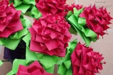 rosas5