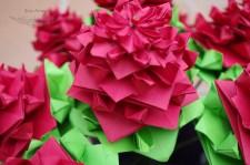 rosas6