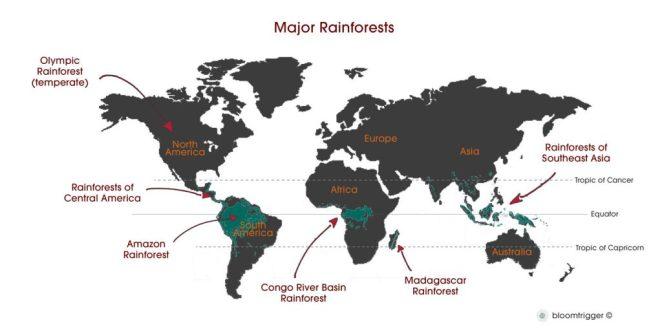 world-map-major-rainforest