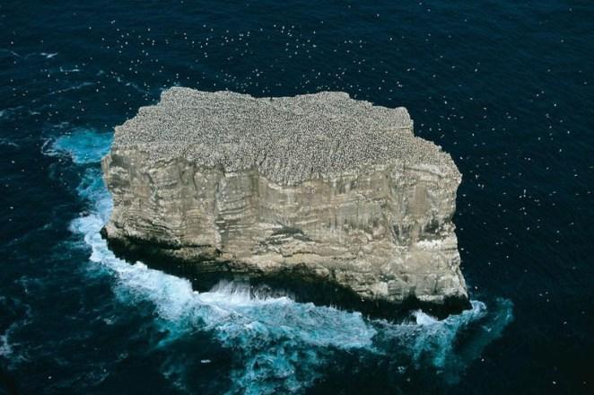 gannet-colony-eldey-island-iceland