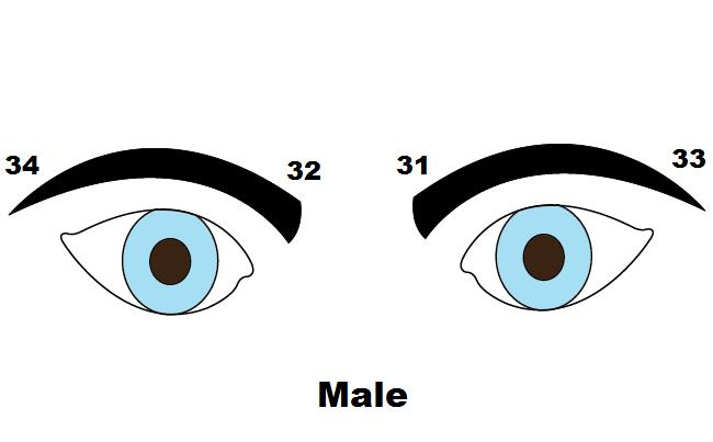What do different shapes of eyebrows say about personality?