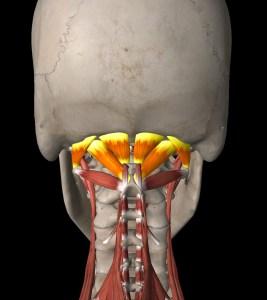 vzpriamovače chrbtice 3