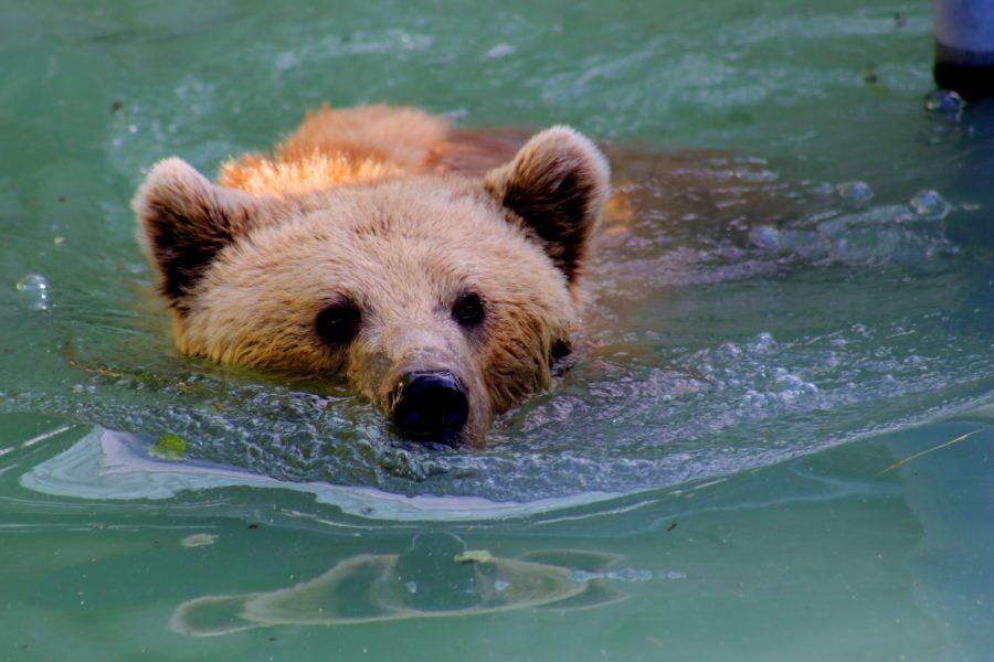 Chodievate plávať? Pri sedavom zamestnaní si možno viac škodíte, než pomáhate