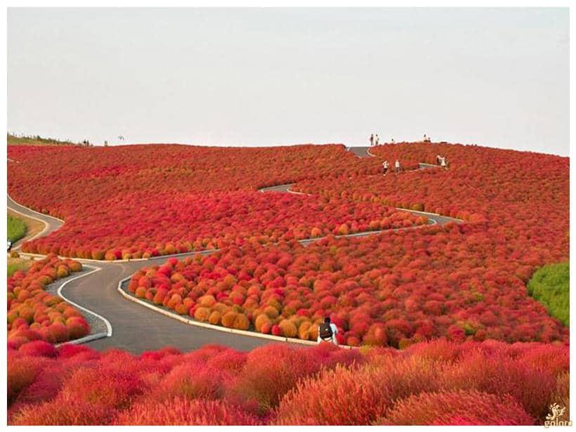 hitachi-seaside