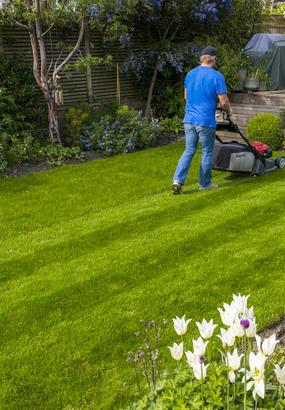 Comment Avoir Une Belle Pelouse : comment, avoir, belle, pelouse, Conseils, Pelouse, écologique, Détente, Jardin