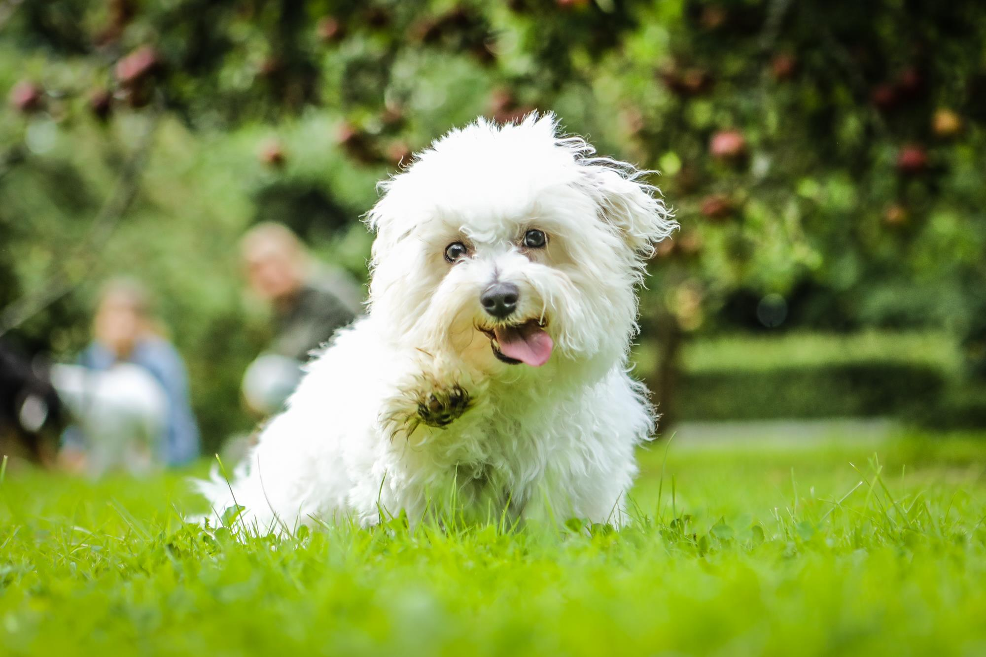 Sidste Nyt Side 3 Af 8 Det Gode Hundelivdet Gode Hundeliv Personlig Hvalpetraening Socialisering Og Hundetraening Side 3