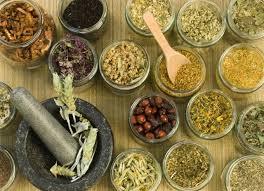 Kumpulan Artikel Tanaman Herbal