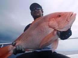 Manfaat Daging Ikan Kakap Laut: Bantu Daya Ingat dan Atasi Penyakit Mata