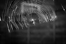 manfaat jaring laba-laba