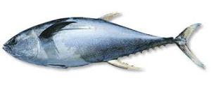 Manfaat Ikan Tongkol Untuk Kesehatan: Badan Kebal Tubuh Kuat