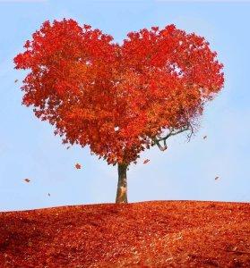 Puisi Cinta Sedih Galau Keren Paling Ok