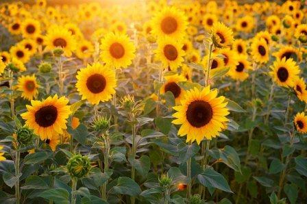 Arti Mimpi Bunga