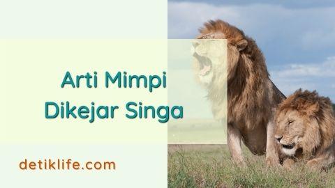 Tafsir Mimpi Dikejar Singa Besar