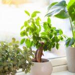 Estas plantas de interior aman la luz solar directa