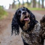 Por qué los perros ruedan en la suciedad y cómo puedes detenerlos