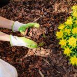 Cómo usar mantillo en sus macizos de flores y en el jardín de su jardín