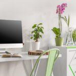 Estas plantas de oficina convertirán su espacio de trabajo en un oasis