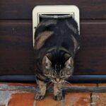 Cómo poner a un gato a dieta cuando tienes varios gatos