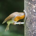 Cómo y cuándo limpiar su (probablemente) repugnante comedero para pájaros