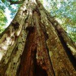 Cómo detectar un árbol podrido antes de la próxima tormenta