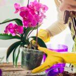 Cómo cultivar orquídeas sin matarlas